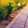<h3>מה כרוך בשיפוץ לגינה? כך תערכו בהתאם</h3>